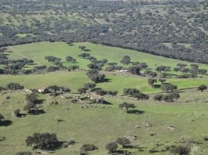 Vista de la basílica visigoda de la Santa Cruz en Yanises. Finca de Matapollito